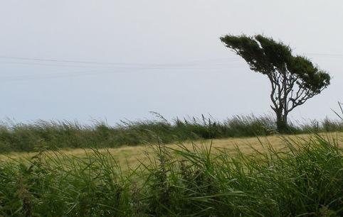 Kinsale Ireland Windswept Tree