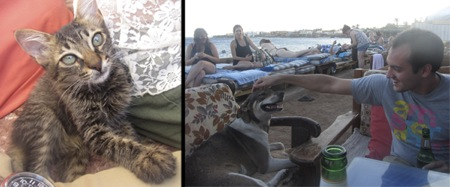 Animals in Dahab, Egypt